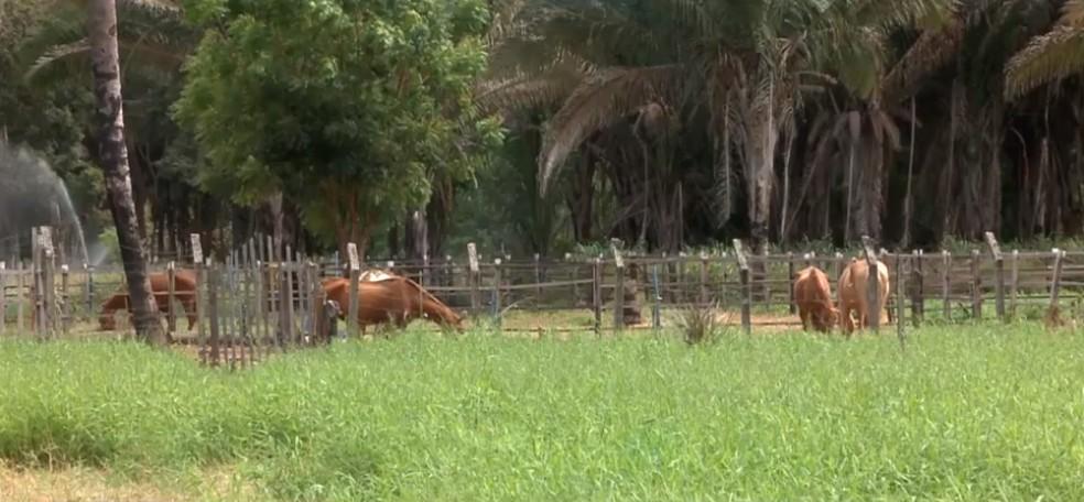 Materiais de animais foram coletados para exames — Foto: Reprodução/TV Clube