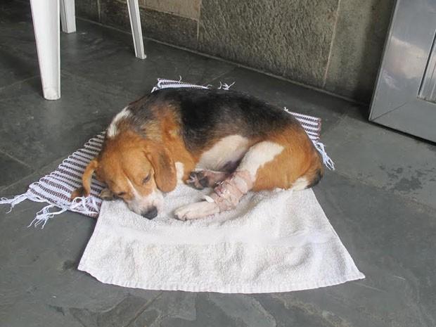 Cachorro machucado aguarda atendimento em clínica (Foto: Paulo Toledo Piza/G1)