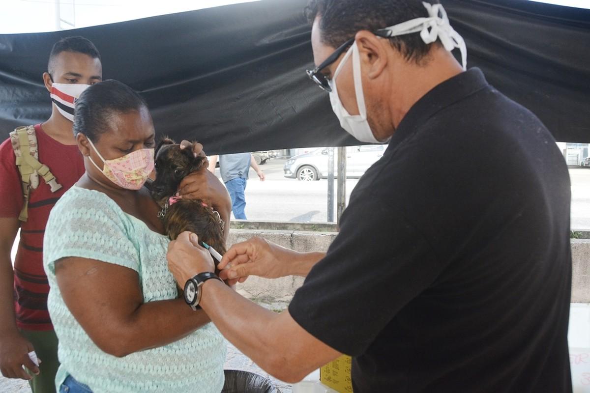 Veja postos itinerantes de vacinação antirrábica em João Pessoa, de 28 de setembro a 2 de outubro