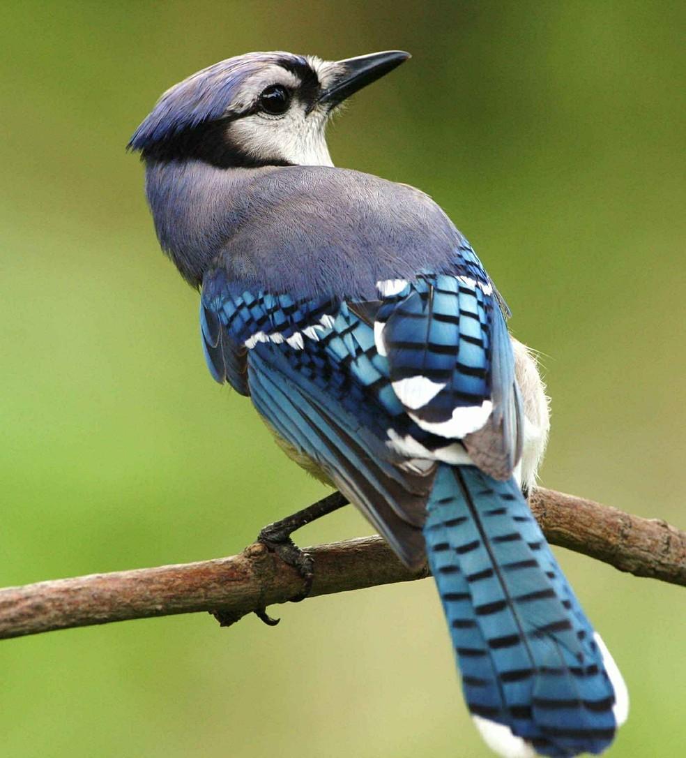 A indústria que produz gaiolas, alimentos e outros requisitos para a manutenção de aves no Brasil é um negócio multimilionário. — Foto: Pixabay