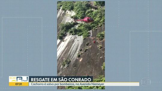 Cachorro é resgatado pelos bombeiros em paredão rochoso no Rio
