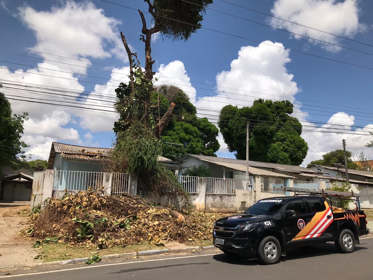 Bombeiro cai de árvore ao ser atacado por enxame de abelhas em Boa Vista
