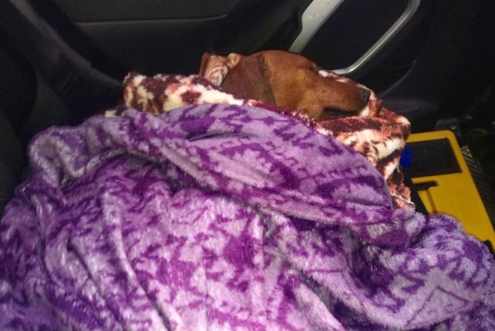 Cachorro que foi enterrado vivo foi resgatado e recebeu atendimento veterinário no Hospital Municipal Pet de Itapetininga (SP) — Foto: União Protetora dos Animais de Itapetininga/ Divulgação