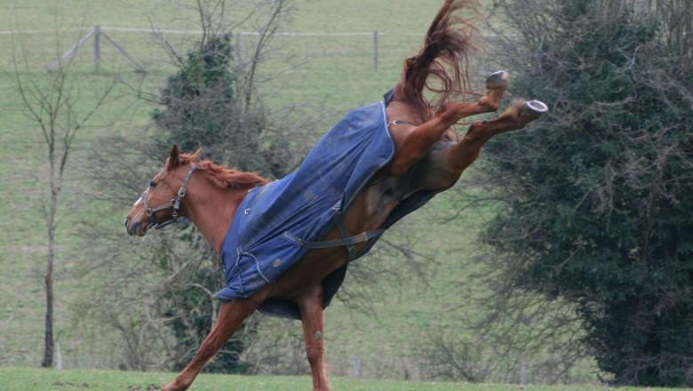 Fazendeiro terá que indenizar vaqueiro que levou coice de cavalo - Revista Globo Rural | Notícias