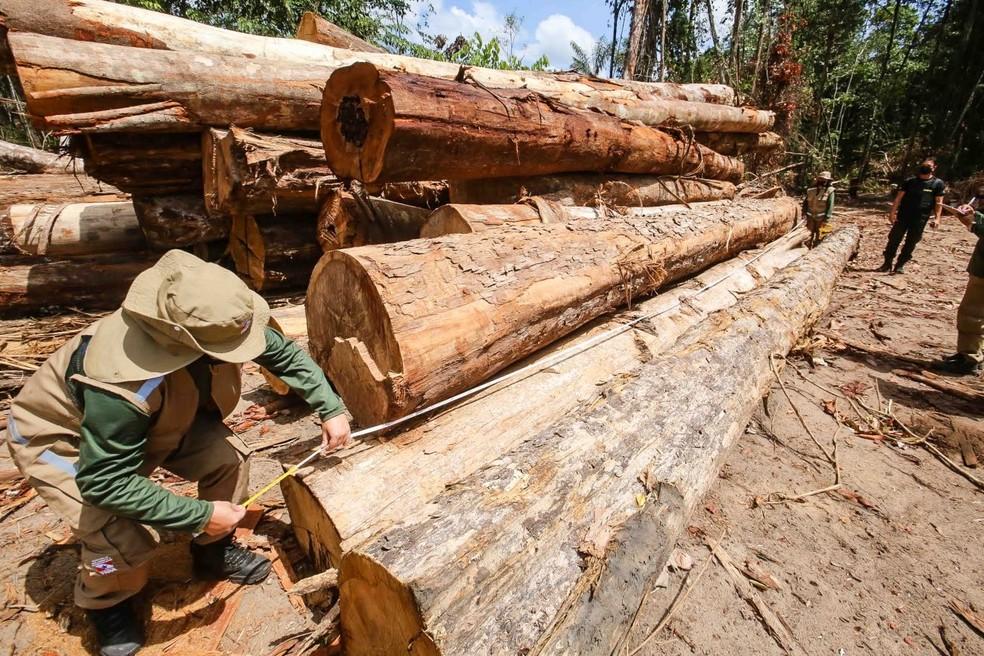 Ibama interdita área de desmatamento ilegal equivalente a 250 campos de futebol em Moju, no Pará, em outubro de 2020. — Foto: Reprodução / Agência Pará