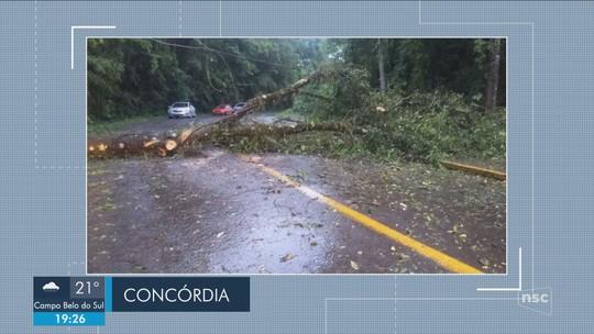 Temporal causa destelhamentos e quedas de árvores em SC