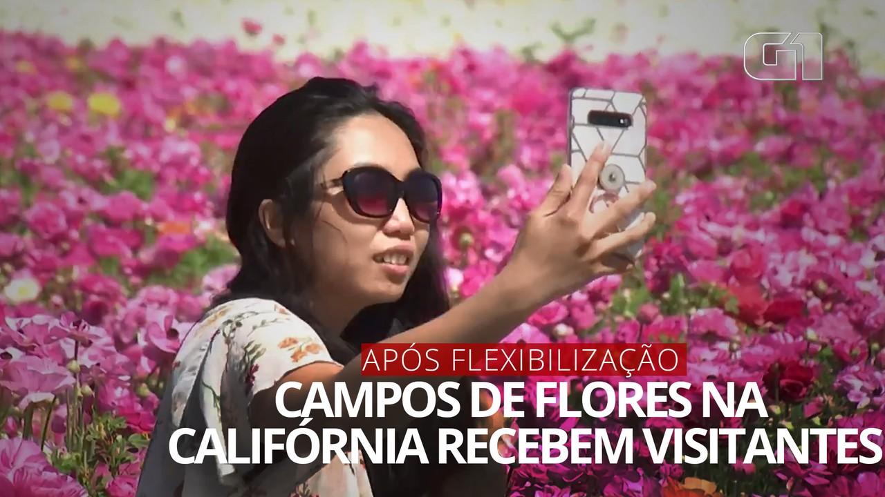 VÍDEO: Visitantes em campos de flores da Califórnia após flexibilização na pandemia