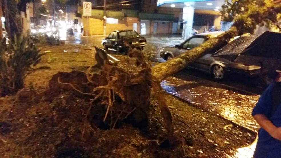 Portal Lavras arvore-lavras-redes-sociais-1- Chuva derruba árvores e muros
