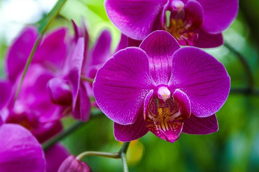 Orquídeas inspiraram uma das questões de biologia do Enem 2018 — Foto: Divulgação