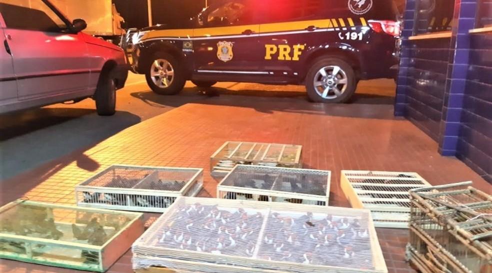 Cerca de 500 pássaros silvestres são apreendidos dentro de carro em fiscalização da polícia na BA — Foto: Polícia Rodoviária Federal/Divulgação