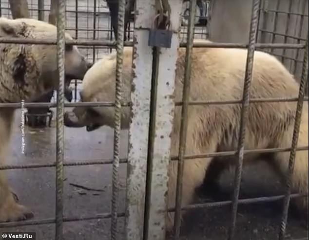 Ursos foram abatidos após ataque a menino (Foto: Reprodução)