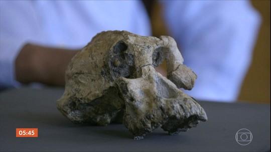 Descoberto crânio de ancestral que viveu há quase quatro milhões de anos
