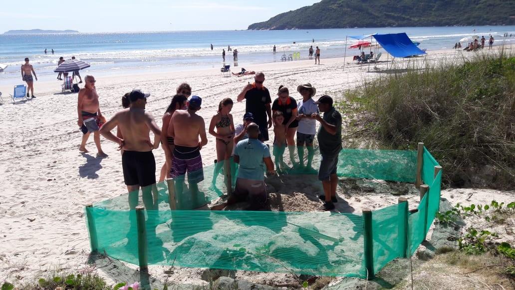 Praia tem áreas isoladas para proteger ovos de tartaruga em Bombinhas  - Noticias