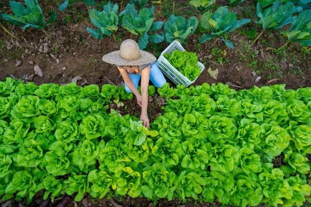 Produtor rural (Foto: Ricardo Wolffenbuttel/Governo de SC/Divulgação)