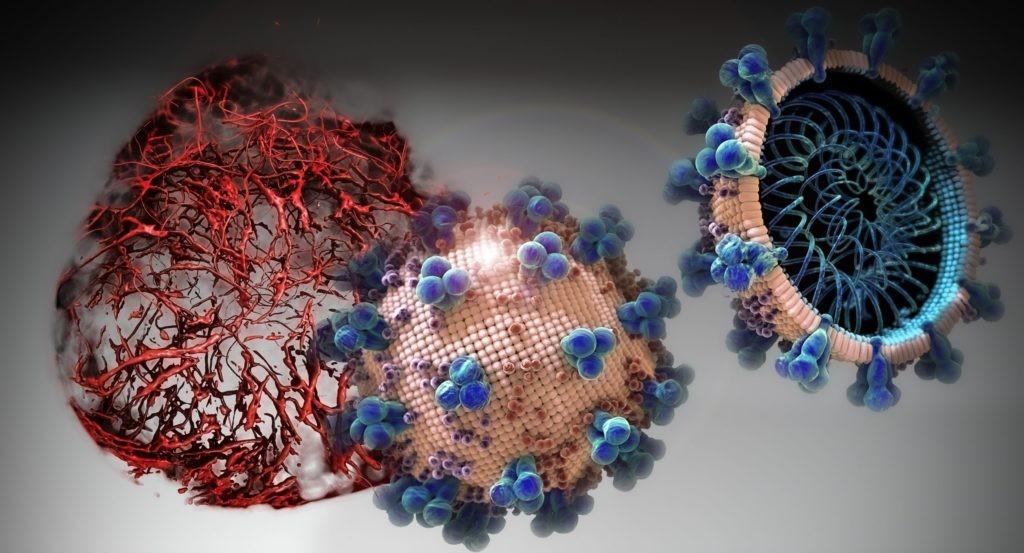 Cientistas testam remédio que impede Sars-CoV-2 de infectar células humanas (Foto: IMBA/TIBOR KULCSAR)
