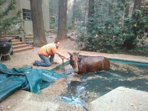 Jeff Hill ajuda cavalo preso em piscina a se libertar (Foto: Facebook / Jeff Hill)