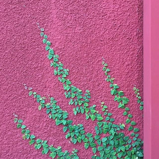 A hera novinha escala um muro nos Estados Unidos  (Foto: Instagram/Reprodução)