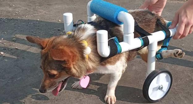 Conheça a adolescente que constrói cadeiras de rodas para animais deficientes gratuitamente