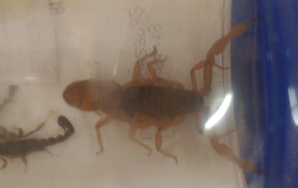 Varredura feita nas imediações da creche encontrou vários escorpiões — Foto: Geni Pereira Lobo Pesin/Cedida