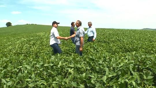 Meu Paraná: descubra mais sobre a cultura da soja no interior do estado