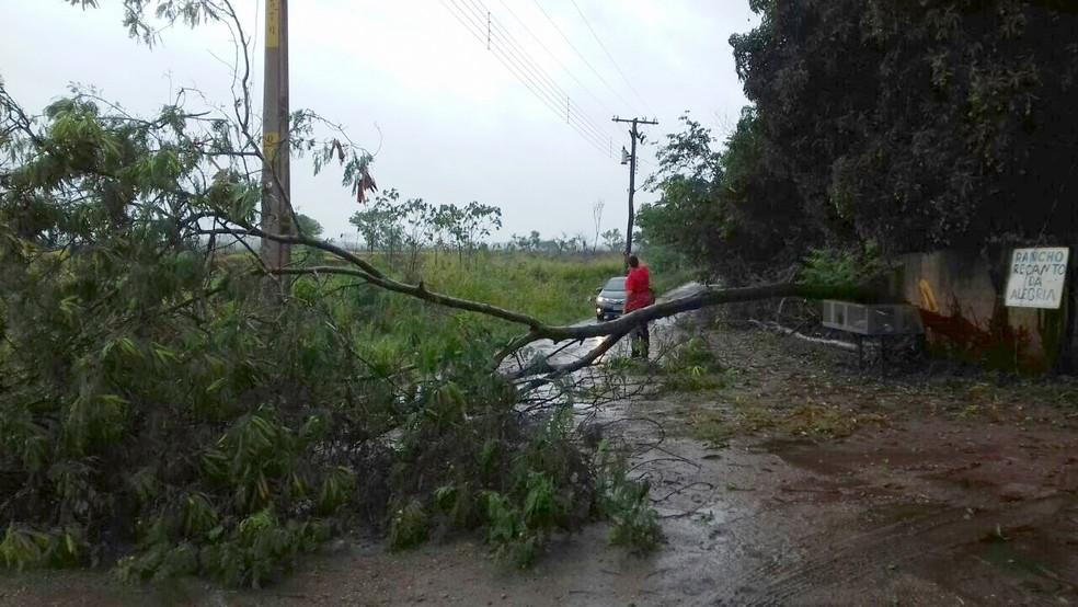 Árvore caiu devido à chuva e impediu passagem no local (Foto: Messias Donnega)