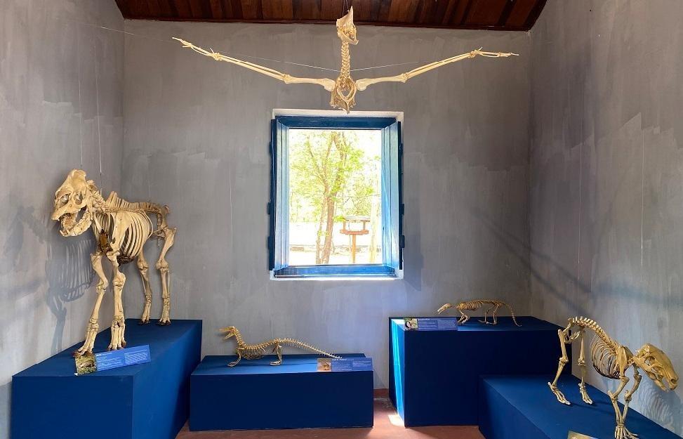 Exposição apresenta esqueletos de animais para explicar bioma do Pantanal