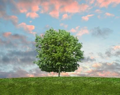 Será que a sustentabilidade realmente está no DNA da sua empresa?