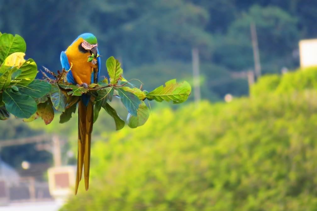 Arara-canindé é destaque no acervo da fotógrafa de natureza (Foto: Maria Izabel Mosini/VC no TG)