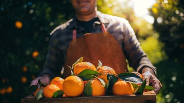As exportações de suco de laranja brasileiro recuaram em volume e faturamento na safra 2018/2019 por causa da queda da produção (Foto: GETTY IMAGES)