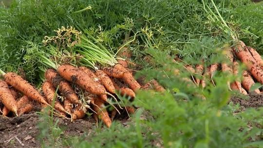 Agricultores focam nos produtos orgânicos para aumentar lucros