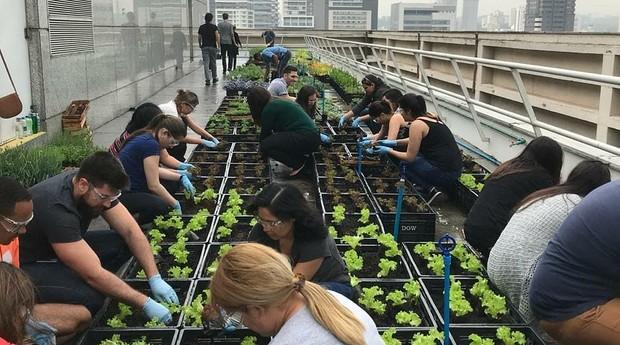 Pessoas ajudam a plantar horta em alto de prédio (Foto: Divulgação)