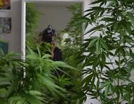 As jardineiras da Cannabis: um novo tipo de influenciadora floreia o Instagram