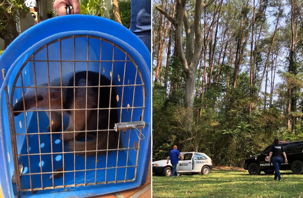 Animal foi resgatado pelas equipes da prefeitura e Polícia Civil de Bernardino de Campos — Foto: Simone Abras/Arquivo pessoal