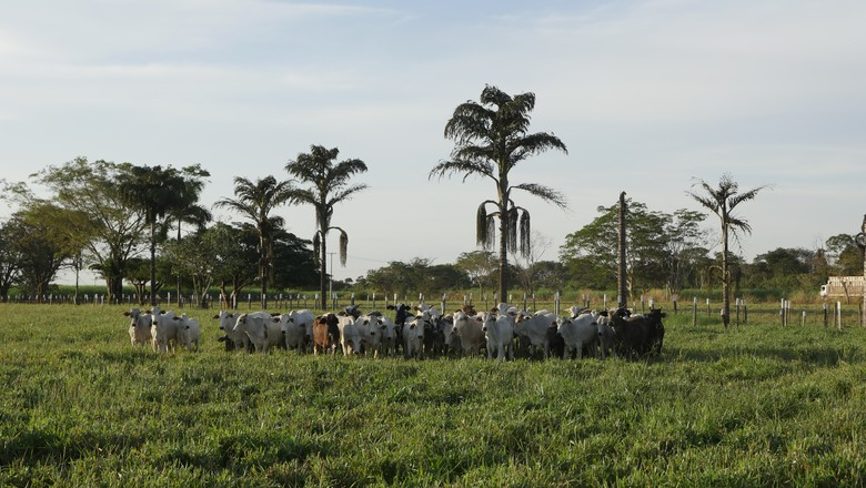 ilpf-pasto-forrageira-barenbrug (Foto: Divulgação/Barenbrug)