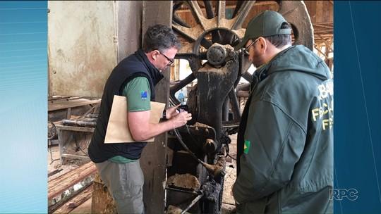 Operação apreende araucárias e fecha empresas suspeitas de exploração ilegal de madeira