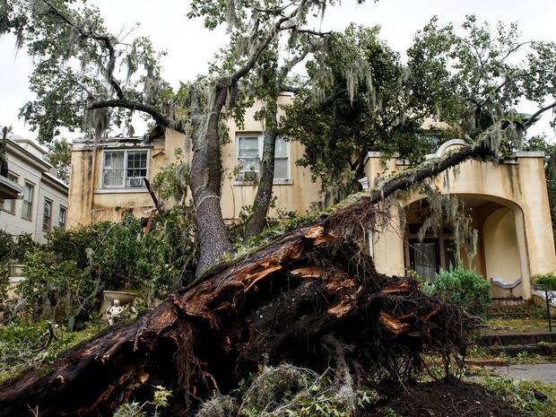 Árvore arrancada do solo em Savannah, no estado da Georgia, região atingida pelo furacão Matthew neste sábado (8)  (Foto: DREW ANGERER / GETTY IMAGES NORTH AMERICA / AFP)