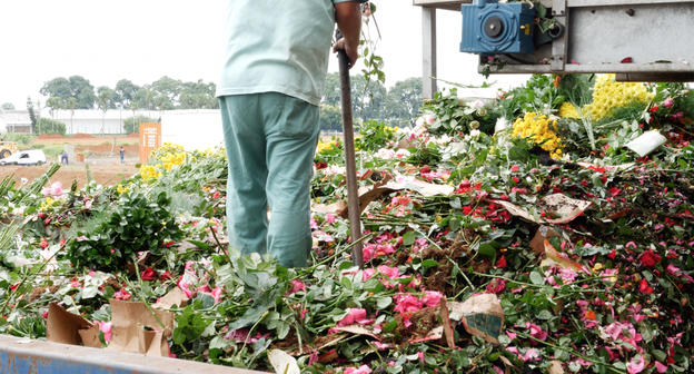 Pandemia de Covid-19 causa perdas milionárias e colapso no setor de flores do Brasil