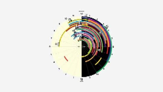 Pesquisa mostra como gênios dividem tarefas e horas de sono