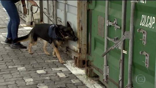 Cães farejadores ajudam a aumentar apreensões de drogas no maior porto do país