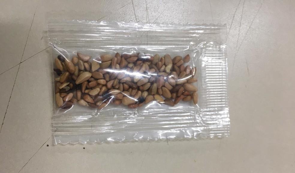 34 pacotes de sementes desconhecidas chegam ao Paraná, de acordo com a Adapar — Foto: Divulgação/Ministério da Agricultura