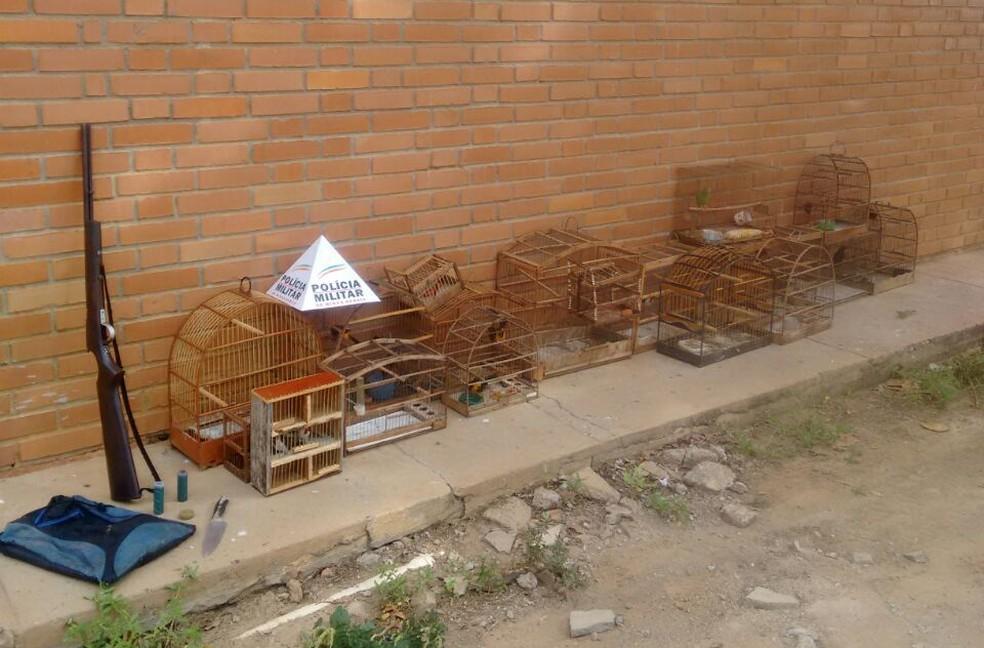 Aves e gaiolas foram apreendidas em três casas (Foto: Polícia Militar/Divulgação)