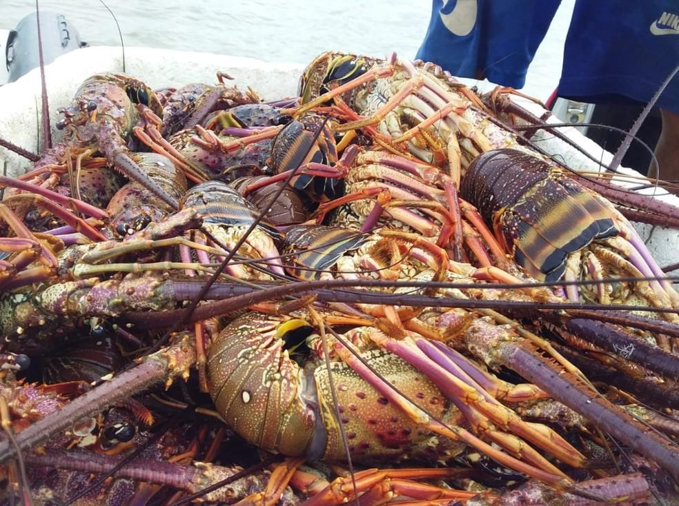Período de defeso das lagostas começou no dia 1º de dezembro do ano passado e vai até o dia 31 de maio deste ano — Foto: Divulgação/Polícia Federal