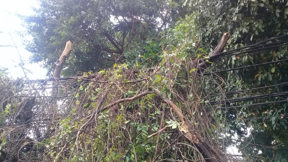 Agentes da Transalvador estão no local. Equipes da  Secretaria de Manutenção da Cidade (Seman) foram acionados para retirar a árvore do local. Ainda não há um prazo para que o serviço seja concluído.  — Foto: Cid Vaz / TV Bahia