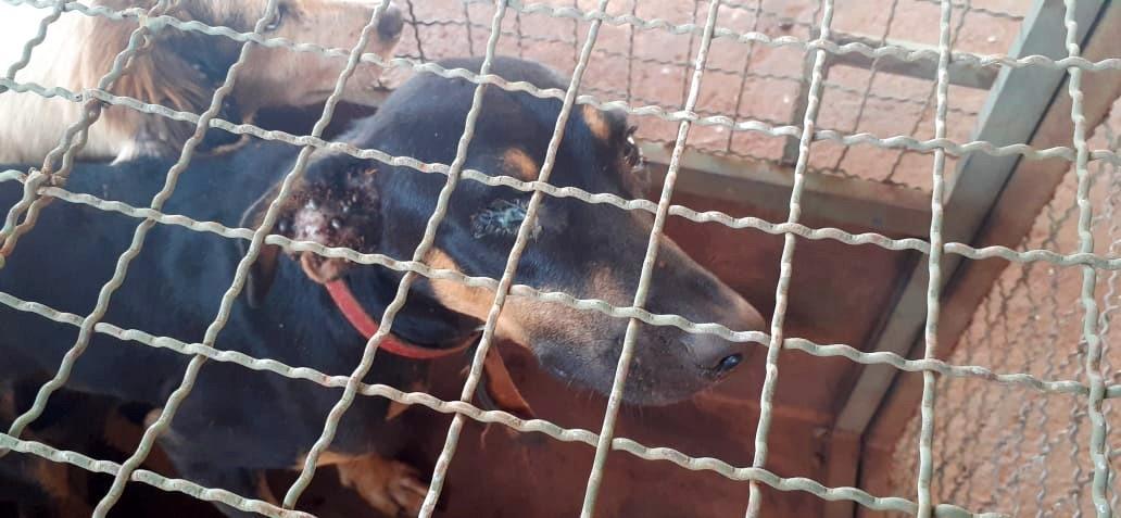 Cães são encontrados em situação de maus-tratos em uma casa em Ituiutaba