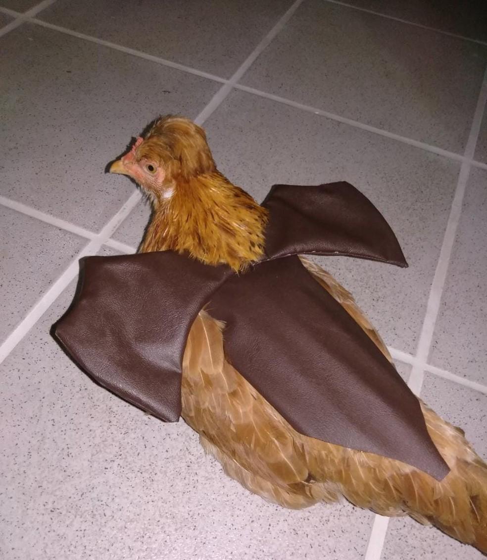 Galinha Nugget fantasiada em festa de Halloween — Foto: Arquivo pessoal