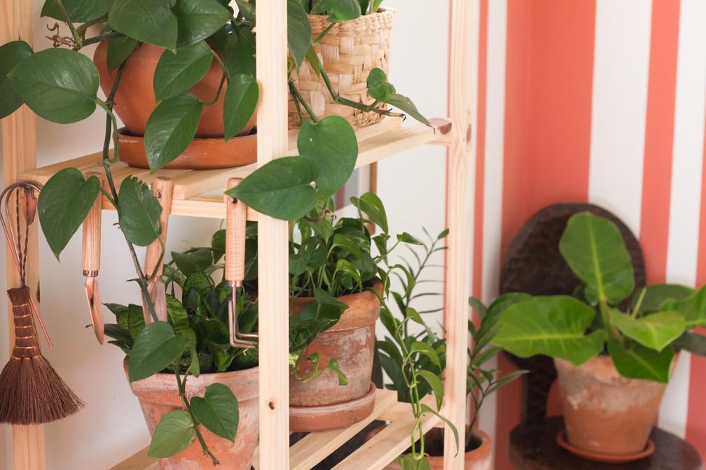 Cuidados com plantas ornamentais — Foto: Rafael Miotto/G1
