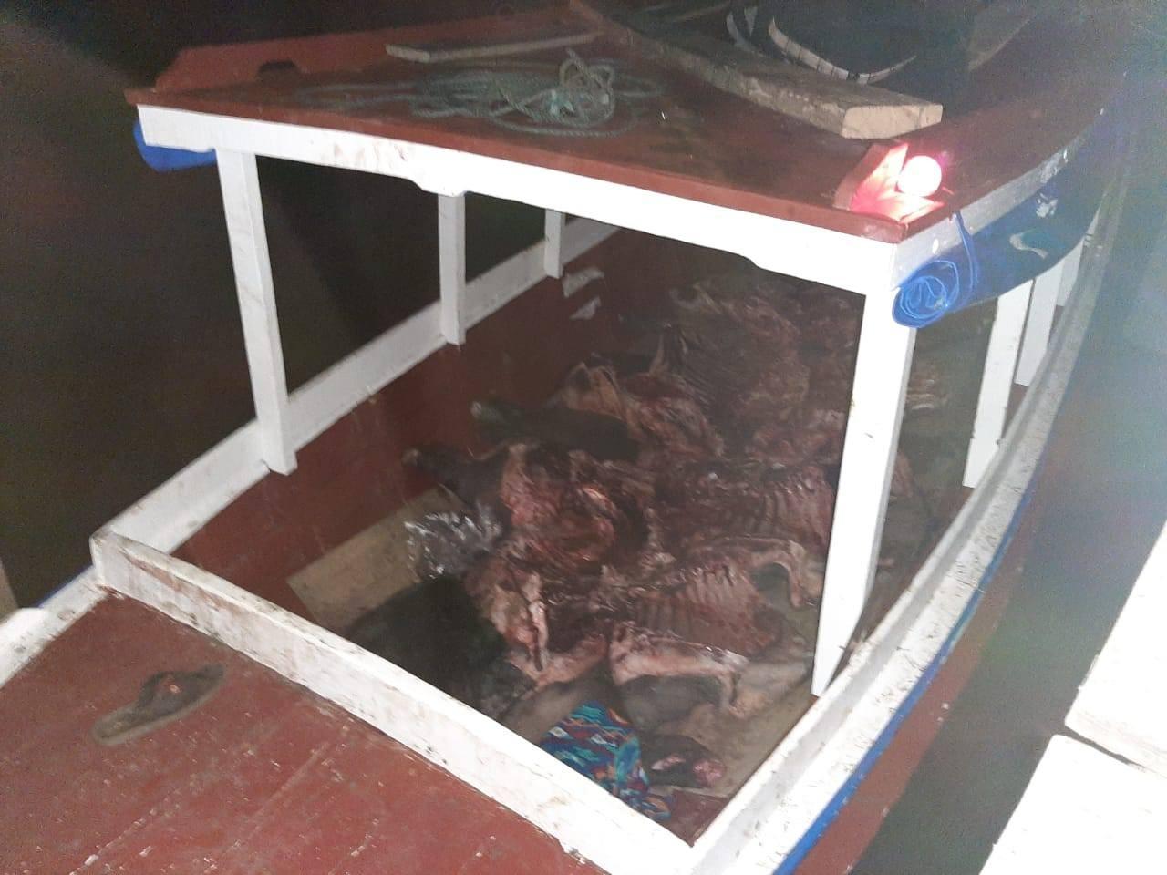 Grupo invade casa e rouba carne de 4 búfalos, voadeira e motor na área rural de Mazagão, no AP - Notícias - Plantão Diário