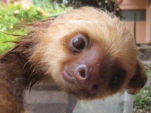Lucy também registrou o banho das preguiças (Fot Lucy Cook/Editora Nossa Cultura/Divulgação)
