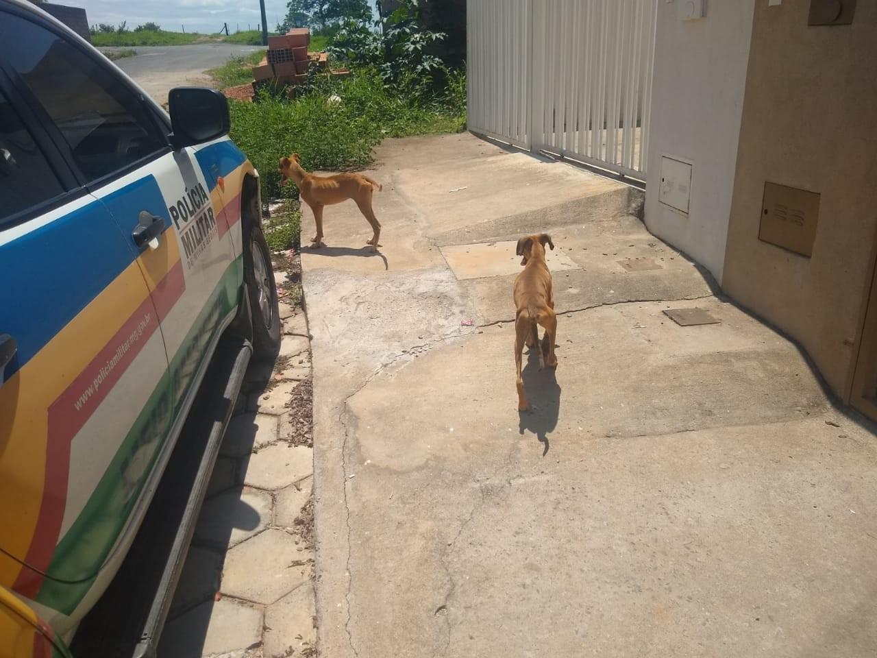 Polícia de Meio Ambiente registra situação de maus-tratos contra dois cachorros no Bairro Cidade Nova, em Formiga