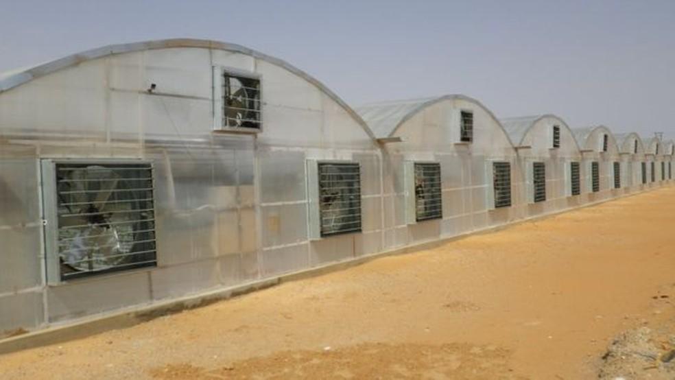 Tecnologia japonesa permite produção de tomate no meio do deserto, como este em Dubai — Foto: Divulgação/Mebiol/BBC